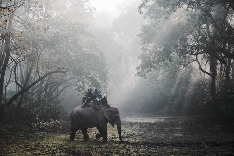 Jungle Safari in Nepal during off season